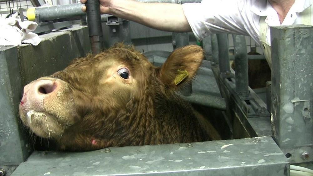 warum-die-aufregung-um-das-halal-fleisch-bei-spar-vllig-umsonst-ist-123-1449159135