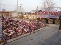 2011-12-pelzindustrie-china-08-c-peta-asia-pacific
