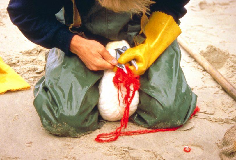 Tiere verenden durch Plastik