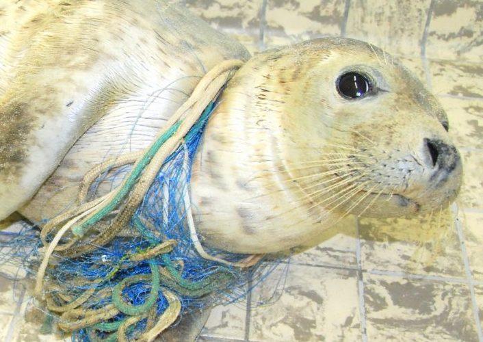 Tiere leiden wegen Plastikmüll