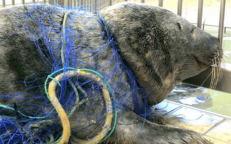 Tiere leiden wegen Plastkmüll