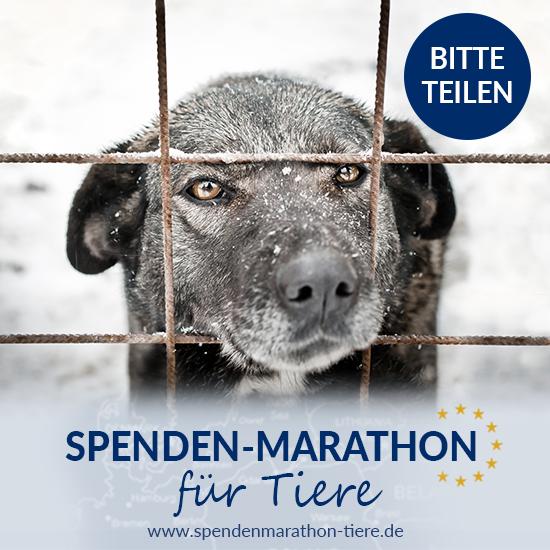 Hungernden Tieren LEBEND durch den Winter helfen mit dem Spenden Marathon des Tierschutz Shops! Jede HIlfe zählt - Vor allem DEINE!